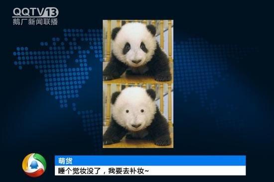 QQTV13